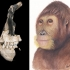 New hominid species from 12 million years ago discovered