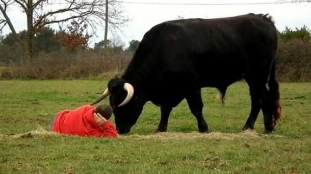 Fadjen, un toro de la ganadería Domecq que se comporta como un perro.